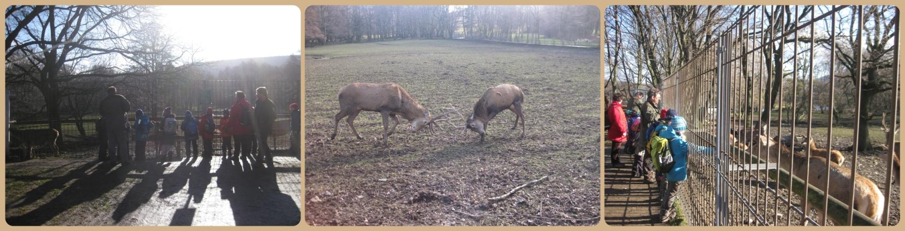 Wildgehege in Bad Harzburg - Draußentag am 14.02.2014
